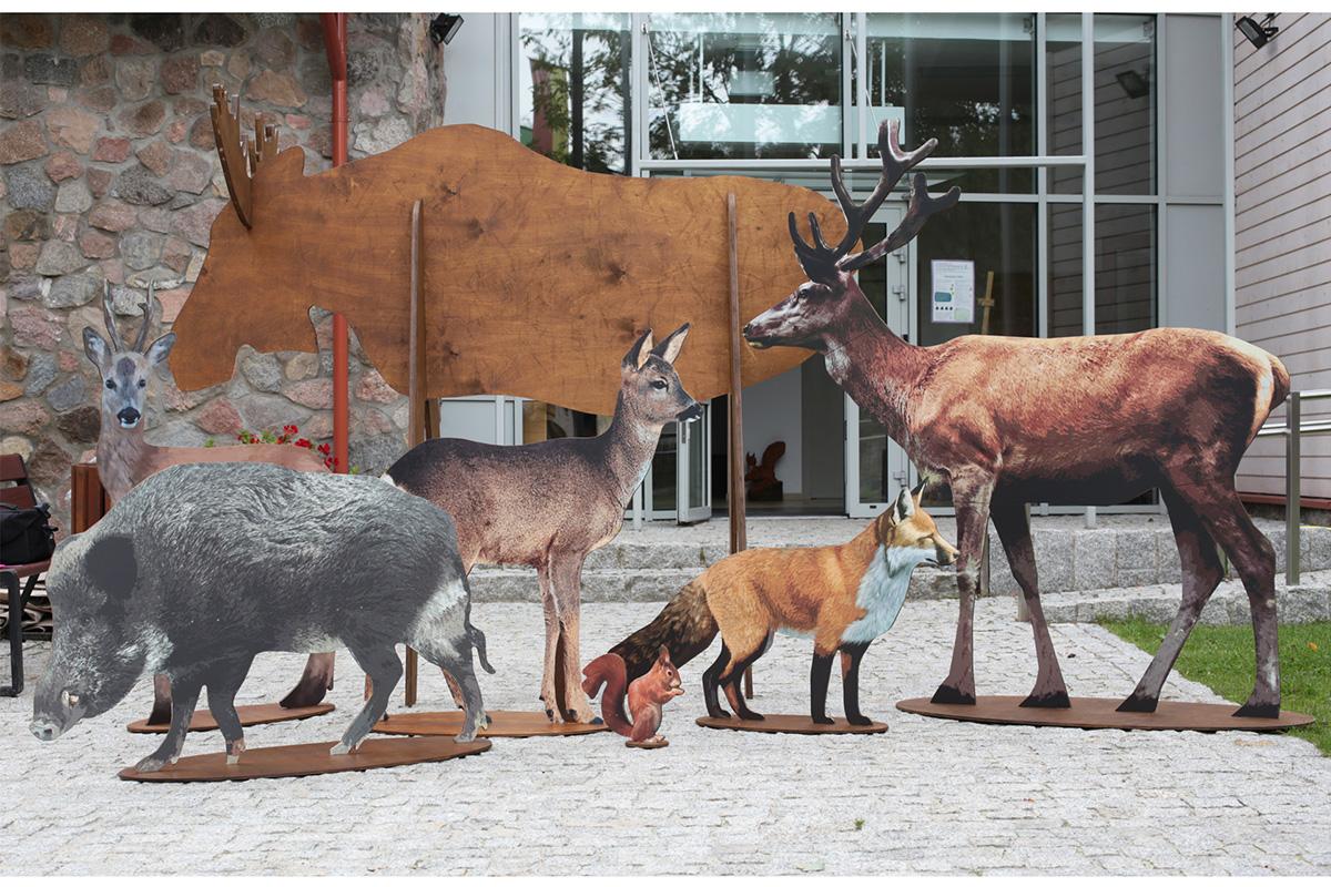 modele zwierząt